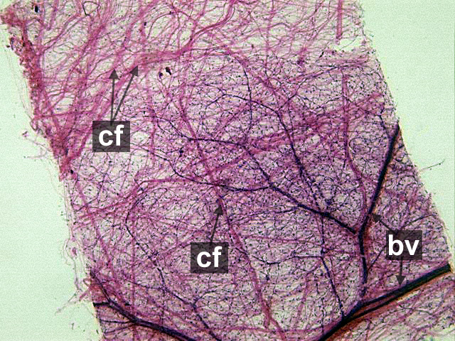 Chapter 3 Page 4 Histologyolm
